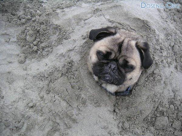 Детишки закопали собаку. 2 фото