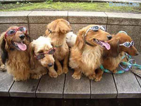 В Германии организовали загородные поездки для собак
