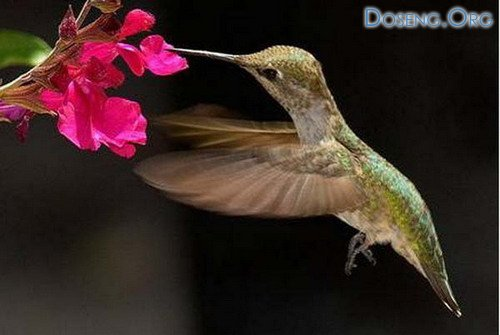 Самые маленькие птички в мире