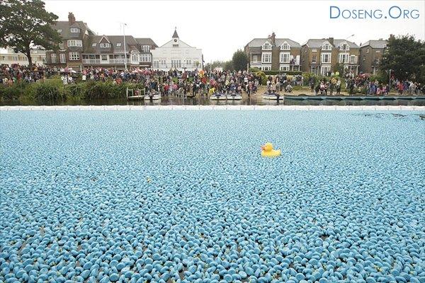 Заплыв 250 тысяч синих резиновых уток по Темзе