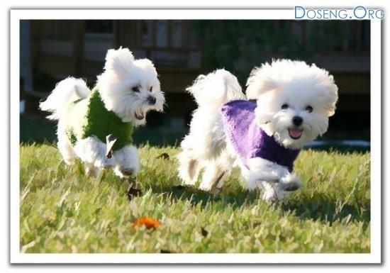 Забавные щенки (11 фото)