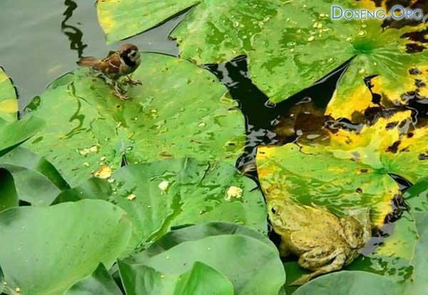 Лягушка против воробья (7 фото)