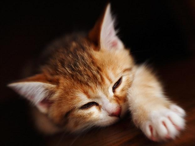 Кошки кошечки и котяры источник