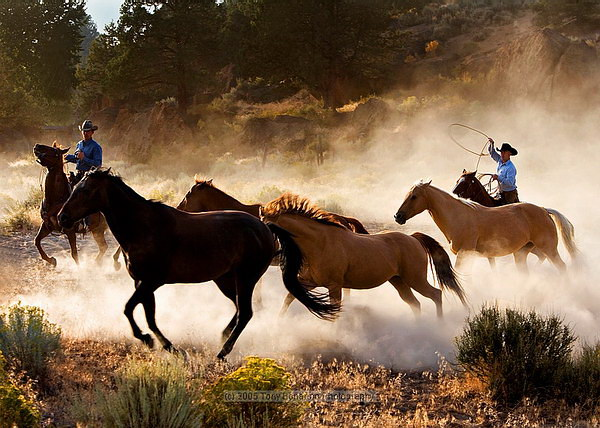 как ловить дикого коня
