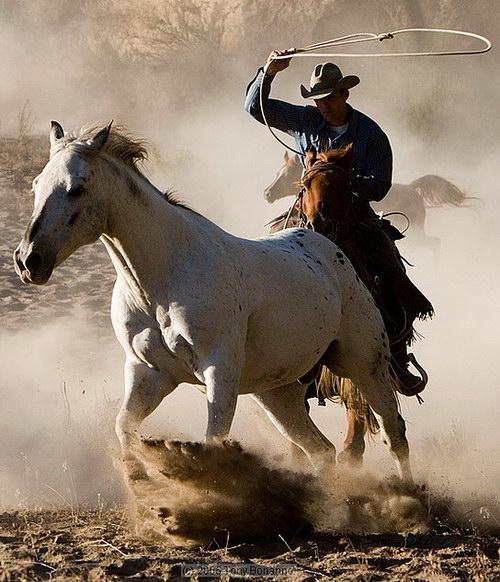 Дикие лошади и ковбои, фотограф Tony Bonanno
