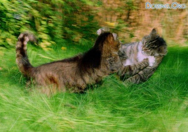 Великолепные работы с животными, Olga Samuels