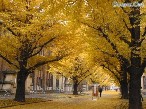Осень золотая наступила (5 фото)