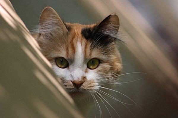 Кошки, кошечки и котяры
