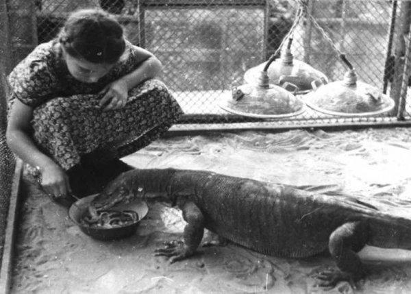 В Московском зоопарке 1920-50-х (из архива Веры Чаплиной) (49 фото)