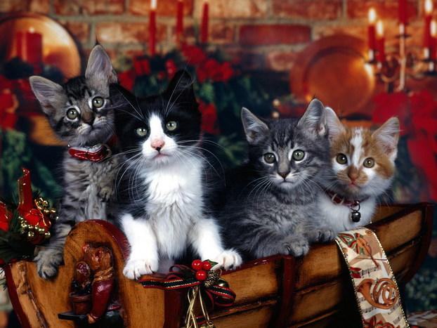 Кошки кошечки и котяры позитив на