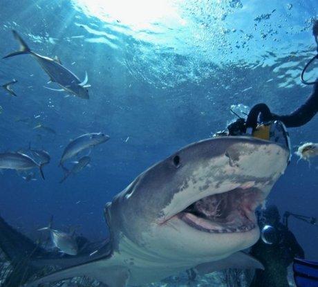 Игра с акулами на Багамах (НЕ для слабонервных)