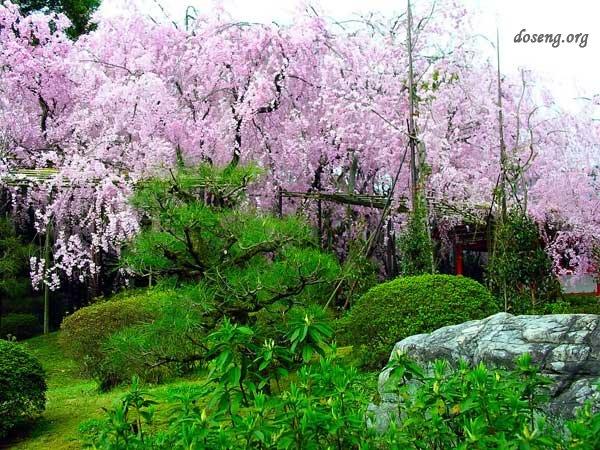 Японский сад (48 фото)