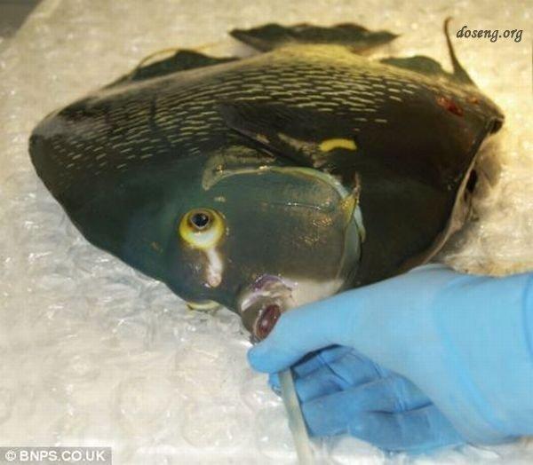 Операция по спасению рыбки (5 фото)