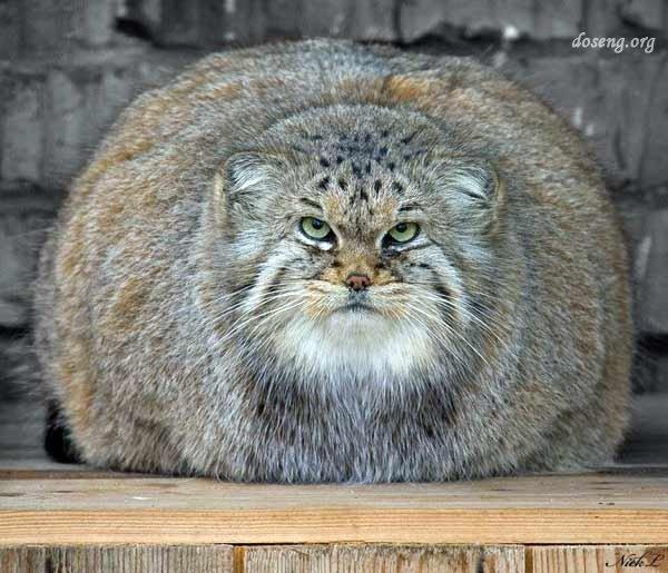 А ты погладил кота?! (24 фото)
