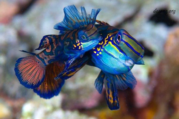 Потрясающая красота подводного мира (24 фото)