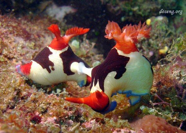 Теги красота подводный мир фото