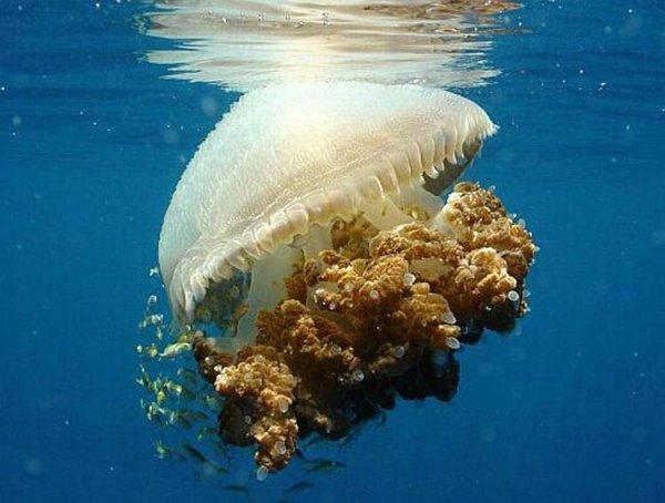 А Вы боитесь медуз?
