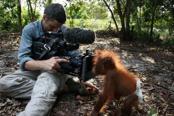 Приют для маленьких орангутангов на Борнео (9 фото)