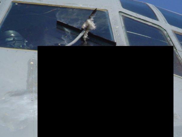 Опасно, так может и человека пробить. Жесть! (3 фото)  (НЕ для слабонервных ...