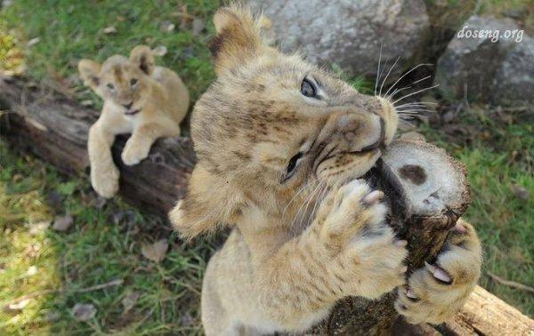 Всемирный день животных (38 фото)
