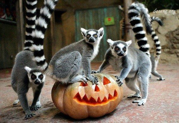 Хеллоуин 2008 (12 фото)