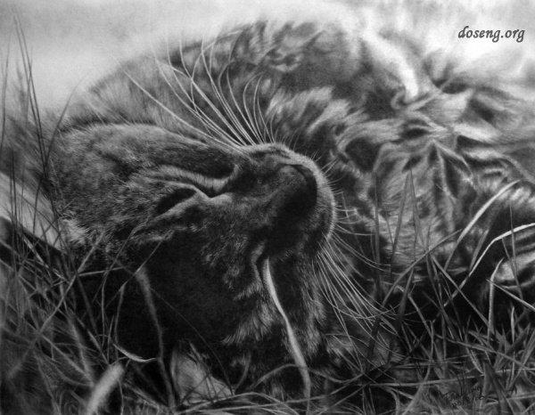 Кошки от Paul Lung