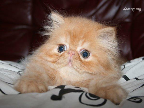 Рыжий котенок (20 фото)