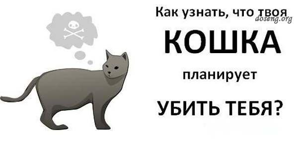 Как узнать, что твоя кошка планирует тебя убить? (9 картинок)