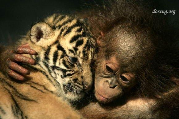 Моменты из мира животных (60 фото)