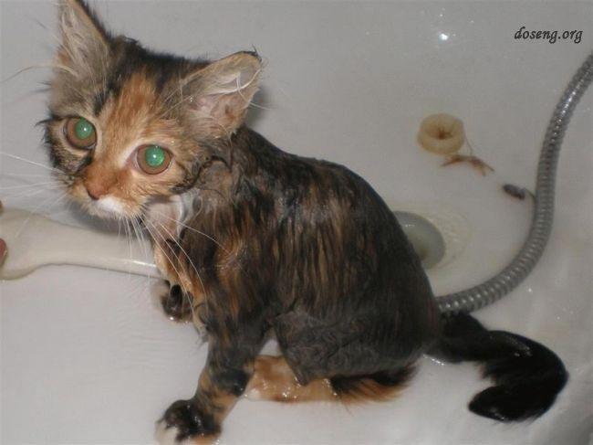 Фото самых худых котов