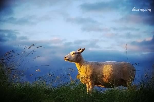 В мире животных (45 фото)