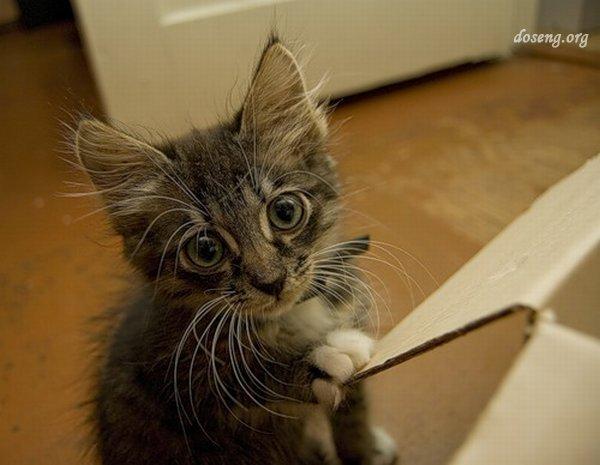 У котенка зачесались зубки (18 фото)