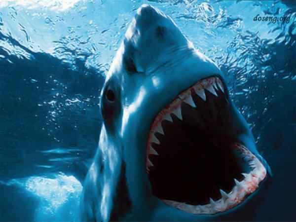 Акулы-убийцы (11 фото)