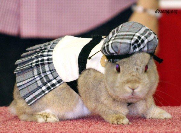 Мода для кролика
