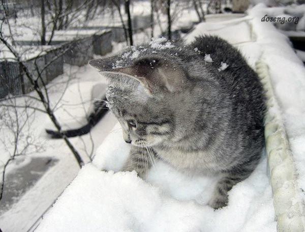 Вот и зима пришла (34 фото)