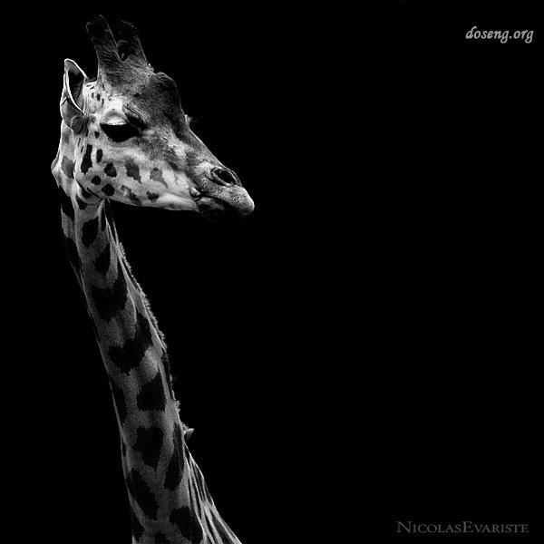 Фотограф Nicolas Evariste