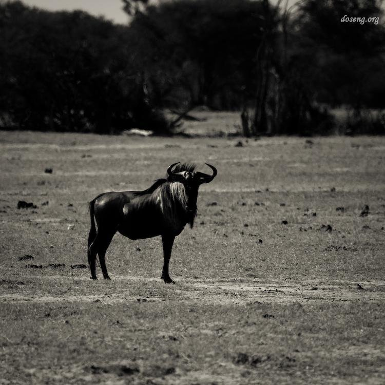 Красивые фотографии дикой природы