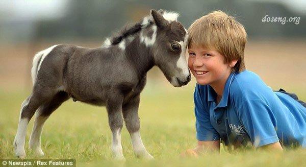 Я люблю свою лошадку... (5 фото)