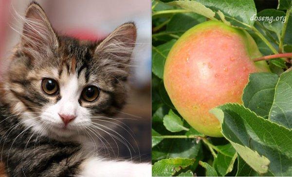 Что общего у яблока и котенка?