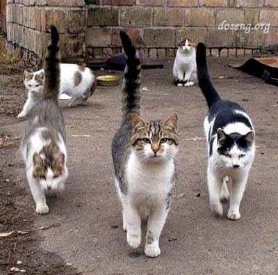 В Москве ветром сдуло стаю котов