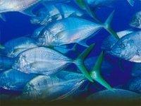 В чем польза морской рыбы?