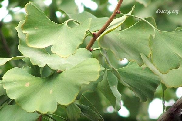 Десятка самых удивительных растений нашей планеты