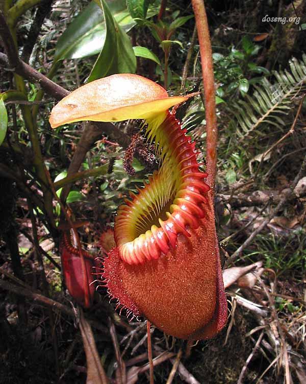 Десятка самых удивительных растений нашей планеты (10 фото)