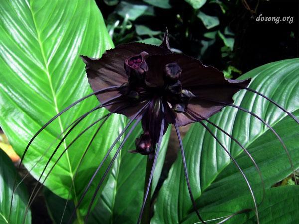 Десятка самых удивительных растений