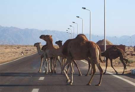 В Египте с шоссе похищены 400 фонарных столбов
