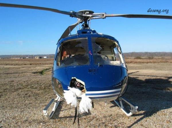 В США вертолет столкнулся со стаей гусей (25 фото)