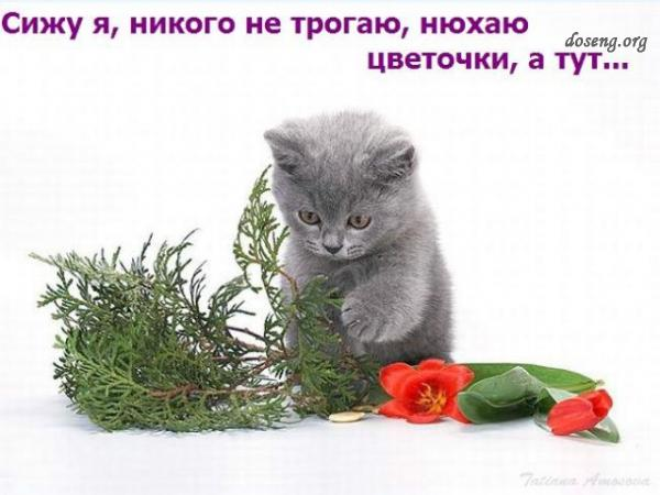 Приключения кота и кролика