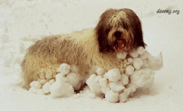 Собаки в снегу (12 фото)