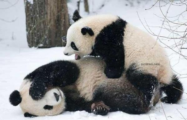 Забавные и смешные фото животных