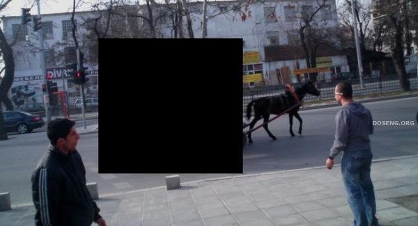 Где-то в Болгарии меняют место жительства (3 фото)